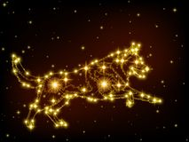 Cão das estrelas do ouro no céu preto Fotos de Stock
