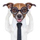 Cão das orelhas da coberta Imagens de Stock