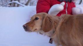 Cão das trocas de carícias da criança menina que joga com o cão na neve no inverno no parque video estoque