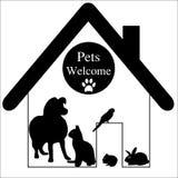 Cão de animais de estimação, gato, papagaio, coelho Imagens de Stock Royalty Free
