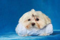 Cão de animal de estimação fotos de stock