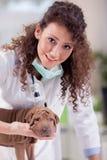 Cão de aperto veterinário fêmea bonito de Shar Pei Imagem de Stock
