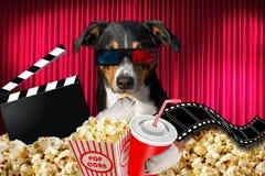 Cão de Appenzeller que olha um filme em um teatro do cinema, com a soda e a pipoca que vestem os vidros 3d foto de stock royalty free