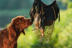 Cão de arma próximo aos troféus Fotos de Stock Royalty Free