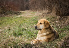 Cão de assento imagens de stock
