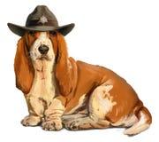 Cão de Basset do xerife Foto de Stock