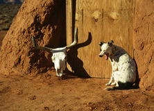 Cão de bocejo Fotos de Stock Royalty Free