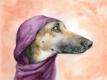 Cão de Brown com um lenço roxo na cabeça que olha afastado Ilustração da aguarela fotos de stock royalty free