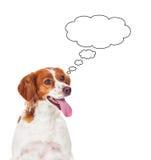 Cão de caça pensativo Fotos de Stock