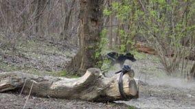 Cão de caça que corre no parque, buscando a bola filme