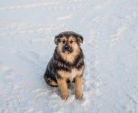 Cão de cabelo desgrenhado foto de stock royalty free