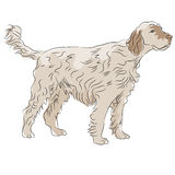 Cão de cabelo desgrenhado Fotografia de Stock