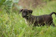 Cão de cachorrinho Fotos de Stock Royalty Free
