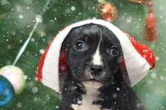 Cão de cachorrinho bonito com o chapéu de Santa no backgrou borrado da árvore de Natal Imagem de Stock Royalty Free