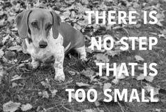 Cão de cachorrinho bonito do bassê com o provérbio preto e branco imagem de stock royalty free