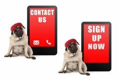 Cão de cachorrinho bonito do pug que olha esperto, sentando-se ao lado do telefone da tabuleta com texto para contactar-nos e ass foto de stock