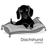 Cão de cachorrinho da raça um bassê em preto e branco Fotografia de Stock Royalty Free