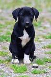 Cão de cachorrinho disperso Imagem de Stock