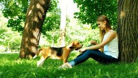 Cão de cachorrinho do lebreiro que come da mão nos braços da mulher vídeos de arquivo