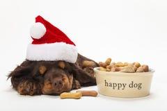 Cão de cachorrinho do spaniel no chapéu do Natal pela bacia de biscoitos Imagens de Stock