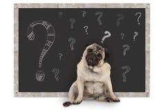Cão de cachorrinho esperto bonito do pug que senta-se na frente do quadro-negro com pontos de interrogação do giz fotos de stock royalty free
