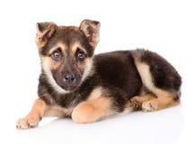 Cão de cachorrinho misturado da raça que olha a câmera Isolado no branco Fotografia de Stock