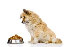 cão de cachorrinho que senta-se com uma bacia de alimento para cães seco Isolado no branco foto de stock royalty free