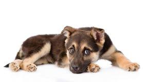 Cão de cachorrinho triste do híbrido que olha a câmera Isolado no branco Foto de Stock Royalty Free