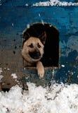 Cão de carneiros Fotos de Stock Royalty Free