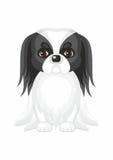 Cão de Chin do japonês Imagens de Stock