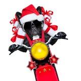 Cão de Christams Imagem de Stock