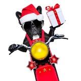 Cão de Christams Fotos de Stock Royalty Free