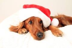 Cão de Christams Imagens de Stock