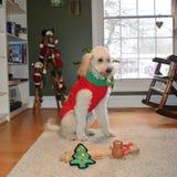 Cão de Christams Foto de Stock