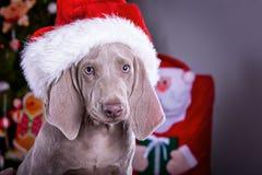 Cão de Christhmas Foto de Stock Royalty Free