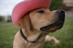 Cão de Dia das Bruxas Imagem de Stock Royalty Free