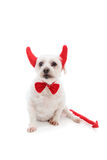 Cão de diabo Fotografia de Stock Royalty Free
