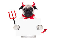 Cão de diabo de Dia das Bruxas Foto de Stock Royalty Free