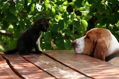 Cão de cão do gato preto e do basset Imagens de Stock Royalty Free