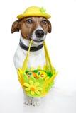 Cão de Easter Fotografia de Stock Royalty Free