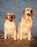 cão de encontro ao mar Fotografia de Stock