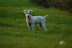 Cão de estimação imagens de stock
