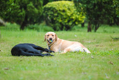 Cão de estimação Imagem de Stock