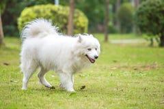 Cão de estimação Imagem de Stock Royalty Free