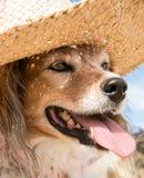 Cão de estimação que veste um chapéu do sol da palha na praia foto de stock royalty free