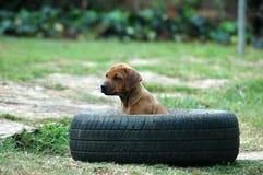 Cão de filhote de cachorro fotografia de stock royalty free