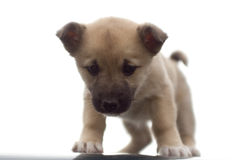 Cão de filhote de cachorro fotos de stock