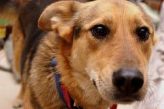 Cão de filhote de cachorro bonito Imagens de Stock Royalty Free