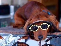 Cão de filhote de cachorro dos óculos de sol Foto de Stock Royalty Free