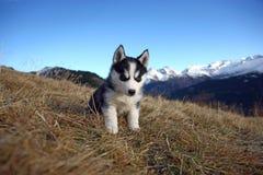 Cão de filhote de cachorro na frente de um cenário da montanha Fotos de Stock